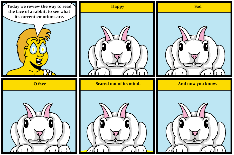 Now You Now: Rabbit Emotion
